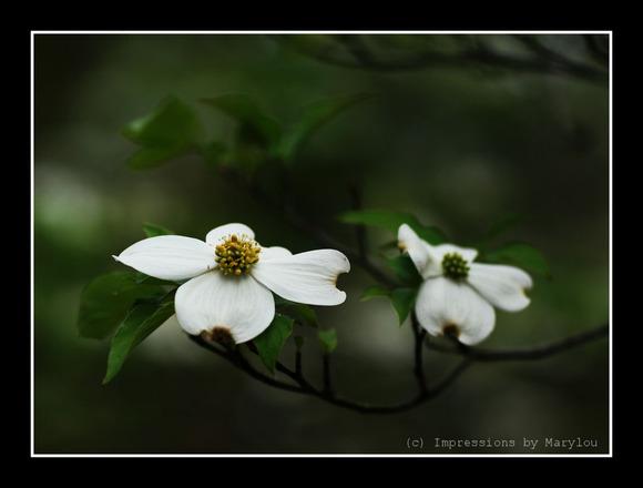 spring 27